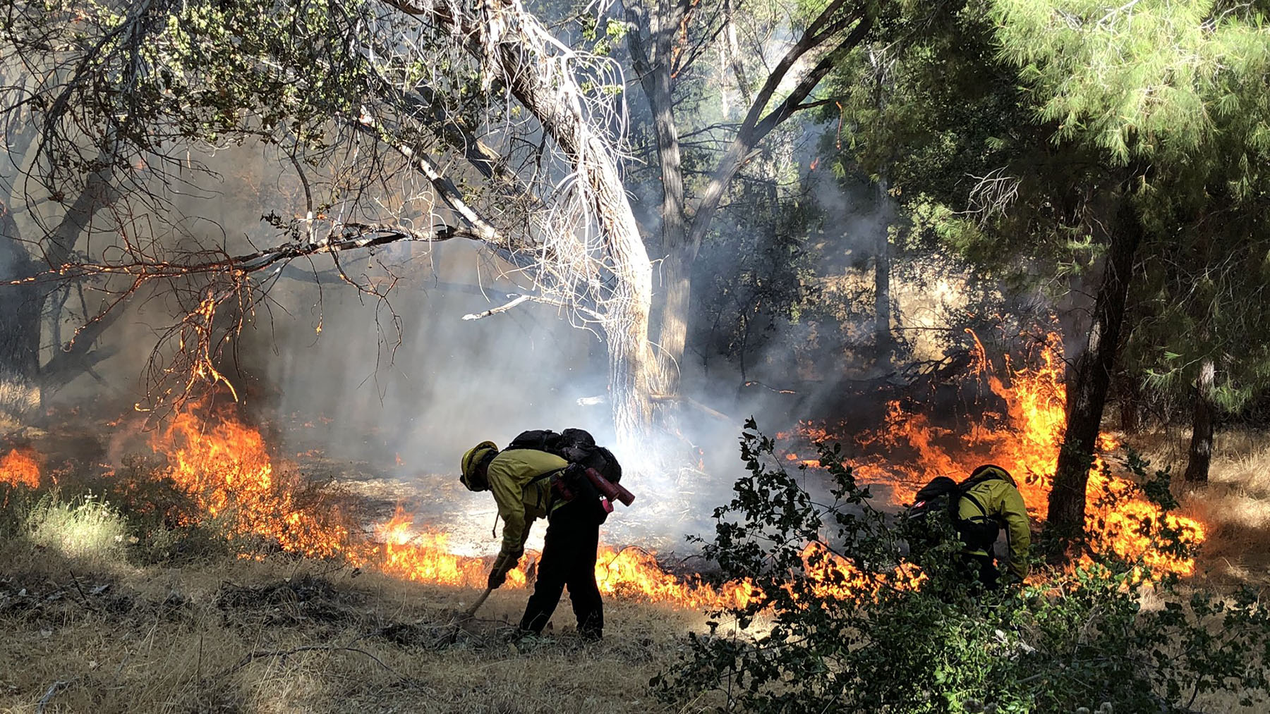 Fire crews battle blazes in Angeles National Forest on August 12, 2020, in an effort to quell the Lake Fire, which is one of 24 fires currently burning in California. (Photo courtesy of Angeles National Forest)