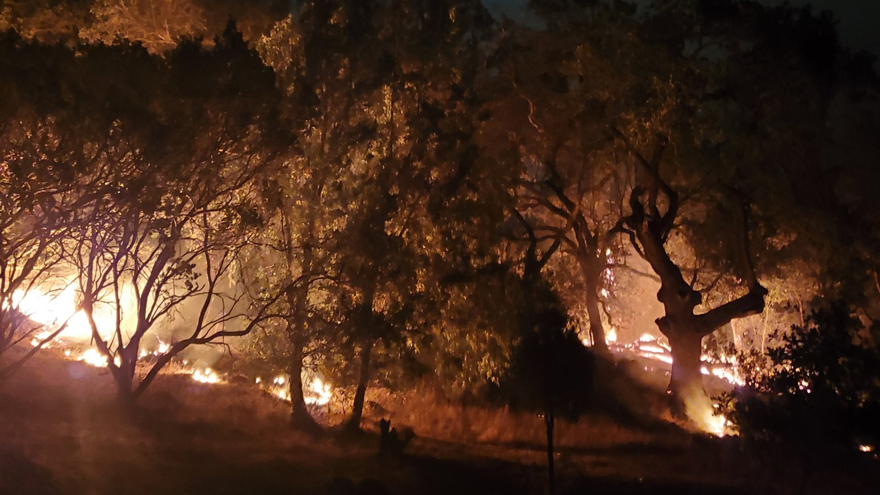 The Glass Fire burns through trees on a Sonoma County hillside. (Photo courtesy of the Sonoma County Sheriff's Office)