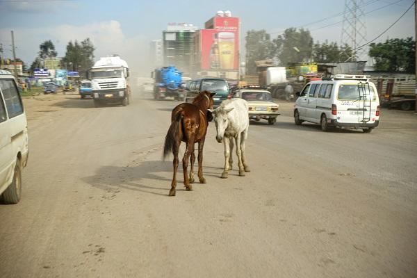 Ethiopia - Horses